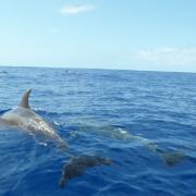 8 dauphins