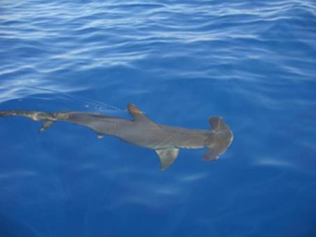 9a requin mart